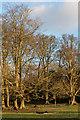 TQ1851 : Donkey Green, Box Hill by Ian Capper