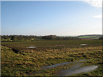 TL4538 : Christmas Day in North Essex by John Sutton