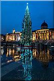 TQ3080 : Christmas Tree, Trafalgar  Square, London W1 by Christine Matthews