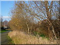 TQ4680 : Path and canal on Thamesmead by Marathon