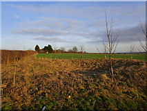 SE9048 : Old pit with new trees by Jonathan Thacker