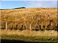 H6894 : Hilly ground, Goles by Kenneth  Allen