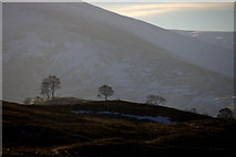 NO1485 : Trees at Newbigging, Glen Clunie by Mike Pennington