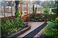 SP0583 : Inside the orchid house at Winterbourne by Phil Champion