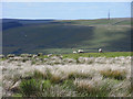 NY7345 : Middle Fell, Alston by Andrew Smith