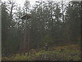 SD3394 : 'Torment of the Metals', a sculpture at Grizedale Forest by Karl and Ali