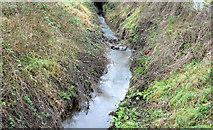J4569 : The Glen River, Comber (January 2015) by Albert Bridge