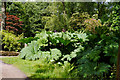 SP0583 : Gunnera obscuring the Japanese Bridge, Winterbourne by Phil Champion