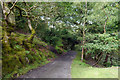 SH6515 : Track down to the lower camping fields at Graig Wen by Phil Champion