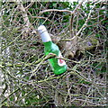 SO6350 : Beer bottle in a hedgerow by Jonathan Billinger