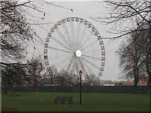 TQ2780 : Ferris wheel and Hyde Park trees by David Hawgood