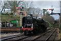 SU5832 : Running Around at Alresford by Peter Trimming