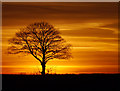TA2429 : Tree at Sunset by Andy Beecroft