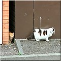 SJ9593 : A pair of cats by Gerald England