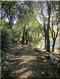SX9065 : Chapel Hill Pleasure Grounds by Derek Harper