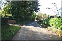 TG0509 : South Green by N Chadwick