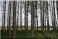 TL5373 : Narrow woodland by N Chadwick