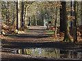 SU8263 : Woods, Wellington College estate by Alan Hunt