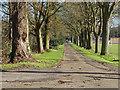 SU8263 : Avenue, Wellington College by Alan Hunt