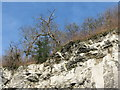 SK2275 : Cliffs above the A623 at Stoney Middleton by Dave Pickersgill