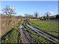 ST5112 : The lesser muddy field, Milcombe Farm by Becky Williamson