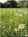 SP3245 : Summer Meadow by Johan VAN DIJK
