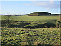 NY9476 : The cleugh of Swin Burn by Mike Quinn