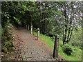 SE0825 : Path in Snake Hill Wood by Derek Harper