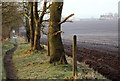 SK5650 : Stanker Hill Farm, Papplewick, Notts. by David Hallam-Jones