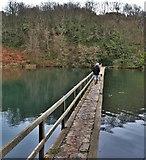 SR9694 : Bridge at the Lily Ponds by Deborah Tilley