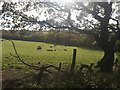 SJ7948 : Bateswood Country Park: view to Bates Wood by Jonathan Hutchins