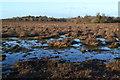 SU3308 : Waterlogged ground on Matley Heath by David Martin