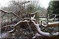 SJ4065 : Fallen tree at Overleigh Cemetery by Matt Harrop