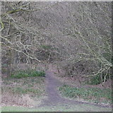 SE2436 : A path into the woods, Bramley Fall Park by Rich Tea