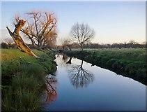 TQ2173 : Beverley Brook in January by Stefan Czapski