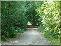TQ0184 : Woodland track, Black Park by Robin Webster