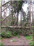 J3629 : Fallen trees in Donard Wood by Eric Jones