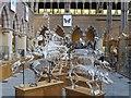 SP5106 : Mammal Gallery by Bill Nicholls