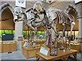 SP5106 : Couple of Elephants by Bill Nicholls
