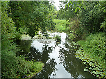 TQ0480 : River Colne by Robin Webster
