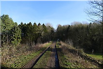 SK9412 : Track into Toll Bar Spinney, Exton Park by Tim Heaton
