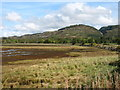 NM8724 : The head of Loch Feochan, at low tide by David Purchase