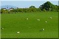 NY0636 : Pasture, Dearham by Andrew Smith