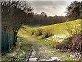 SD8500 : Path (Fitzgeorge Street) through Sandhills by David Dixon