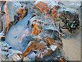 NH7459 : Rocks of the Rosemarkie Inlier by Julian Paren