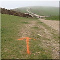 TQ4905 : Straight on! Sprayed direction arrow for charity run, Bopeep, South Downs by Robin Stott