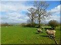NY4640 : Pasture, Calthwaite, Hesket by Andrew Smith