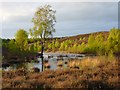 NY5039 : Lazonby Fell, Lazonby by Andrew Smith