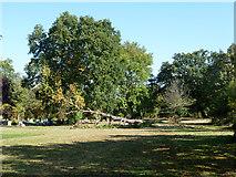 TQ3473 : Fallen tree, Camberwell Cemetery by Robin Webster