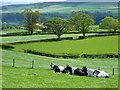 NY5330 : Pasture, Penrith by Andrew Smith